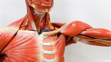 Abenteuer Diagnose: Thoracic-Outlet-Syndrom | NDR