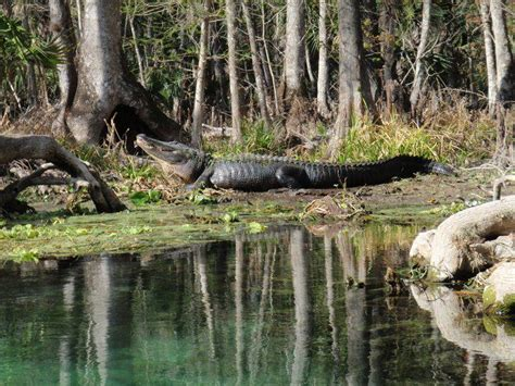 Way Down Upon the Suwannee River | Local News | record