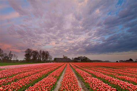 The Netherlands travel - Lonely Planet