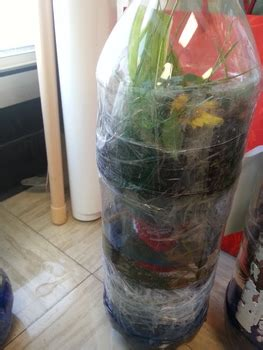Biology - Ecosystem in a bottle student activity by