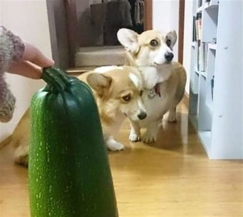 Here's Proof That Scaredy Dogs Are Funnier Than Scaredy-Cats